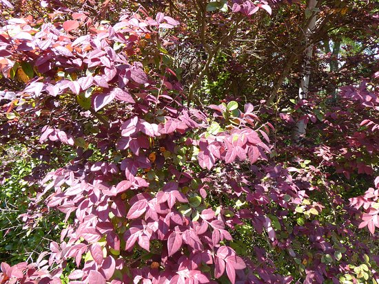 The Sydney and Walda Besthoff Sculpture Garden at NOMA: Fabulous foliage.