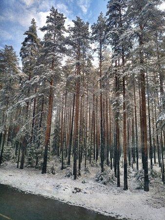 …Автобус плавно качнуло, я открыла глаза и замерла. За окном под пышной шубой снега дремал лес. Своим величественным видом он приглашал в сказочную страну, имя которой Карелия. «Если ты полюбишь Север, не разлюбишь никогда», - вспомнились строчки из песни Самоцветов и зазвучали в такт мирного хода колес.
