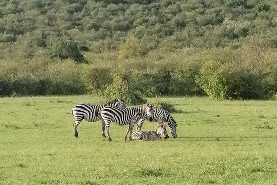 Hyrax Safaris
