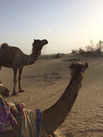 Jaisalmer, Hindistan: Chilling with the crew