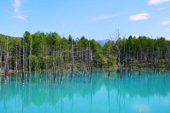 Hokkaido! Asahiyama Zoo, Biei Blue...