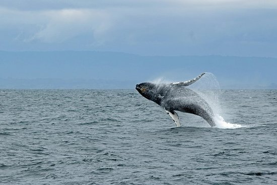 Whale Watching & Wildlife Excursion