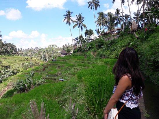 JJ Bali