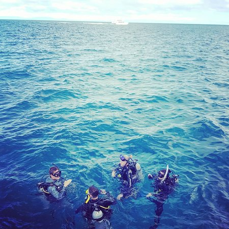 Great Barrier Reef Snorkeling and Diving Cruise from Cairns: About to descend at the first reef
