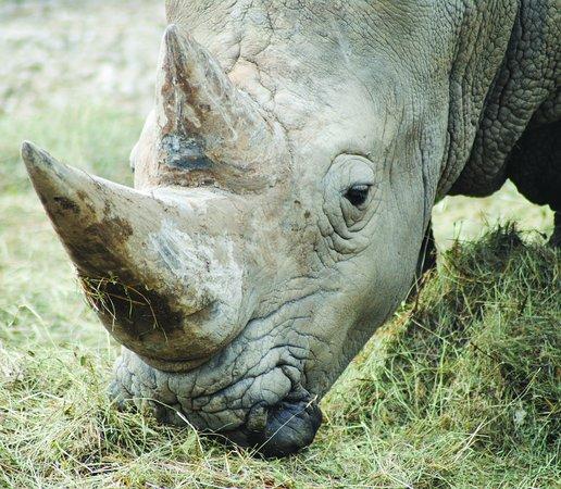 Parco Natura Viva - Bussolengo - Verona - rinoceronte