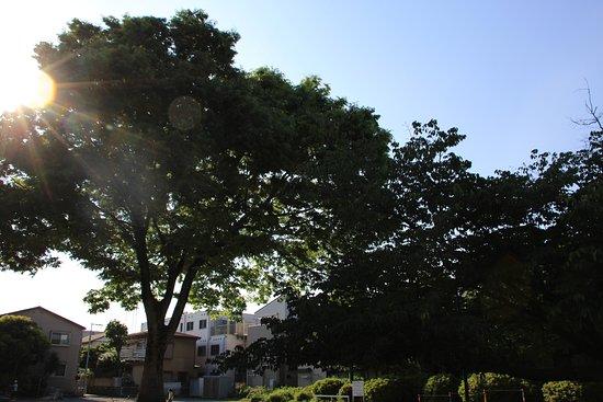 Kosugi Gotencho Park