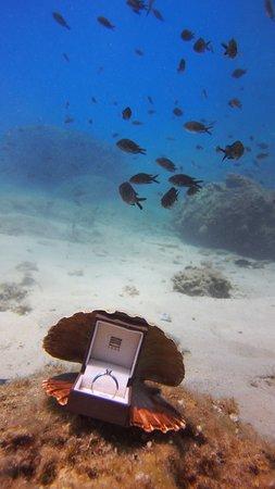 Bikini Dive Engagement ring