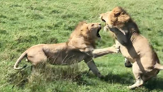Fighting over a girl