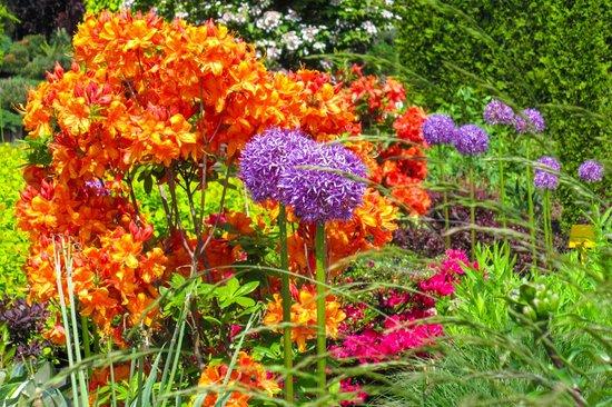 Ogrody Kapias: Kapias Tree Garden