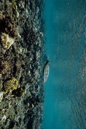 Mkoani, Танзания: sealife