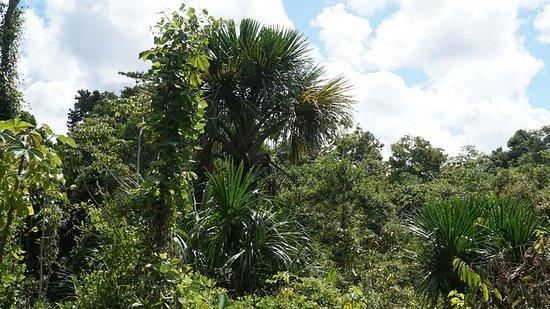 Pishcota Produccion: Fundo Pishcota:Convive con la naturaleza  - área de campamento