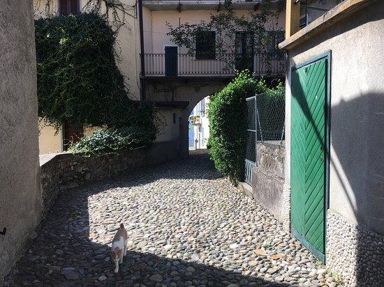 The cat at Paruscée