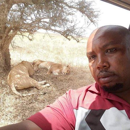 Lake Manyara national park Tanzania home Of tree climbing lions