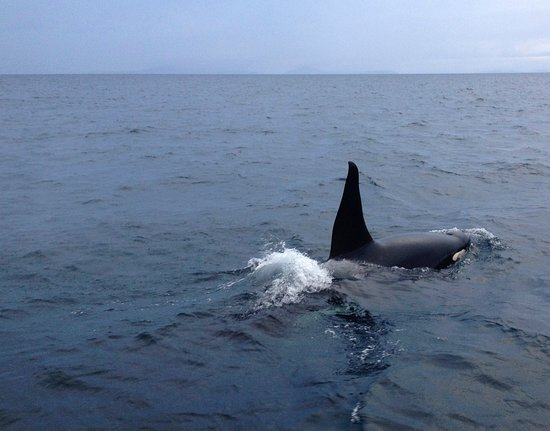 Our resident orcas love to put on a show for visitors