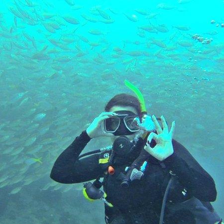 Many fishs :D