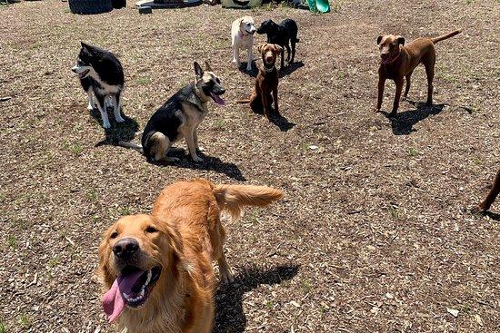 Derty Dog Canine Retreat & Fitness Club