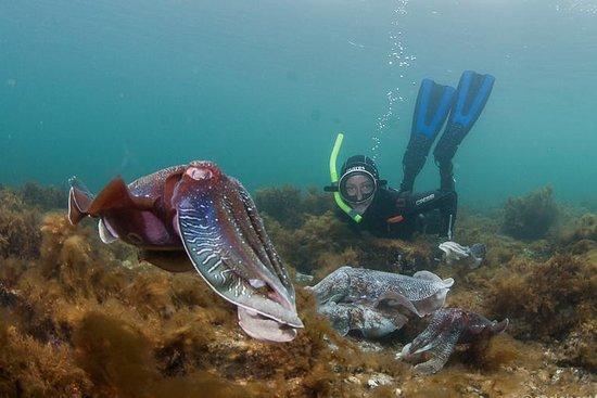 EMS - Experiencing Marine Sanctuaries