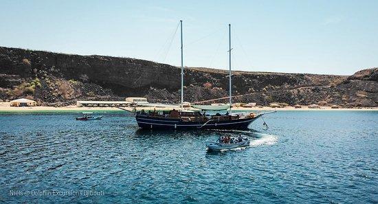 Dolphin Excursions Djibouti