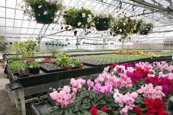 Thorngrove Garden Centre