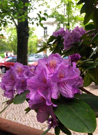Athena Grill: Netter Blumenschmuck ziert das Restaurant