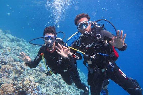 Alex Ibragim Diving