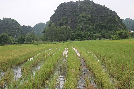 Luxury Ninh Binh - Small Group Only 7 People: see vast of rice paddies and beautiful limestone mountain