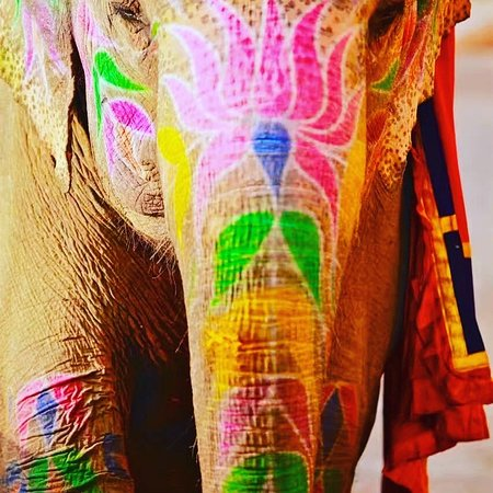 India Car Rental Service: Enjoy Elephant safari with us