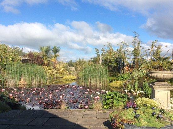 Coolwater Garden