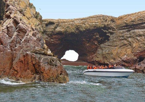 Buganvilla Tours: Tour a las Islas Ballestas - Paracas