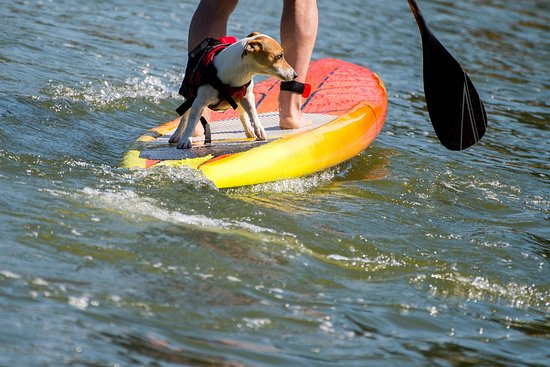 Phoenixville SUP Paddle Board Rental and Sales
