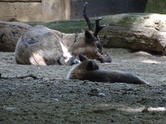 Zoo Duisburg: Zoo Duisburg