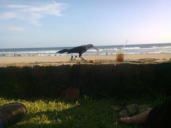أكابولكو, المكسيك: Y apareció esta ave traviesa...en el bello Acapulco, siempre será un bello recuerdo!