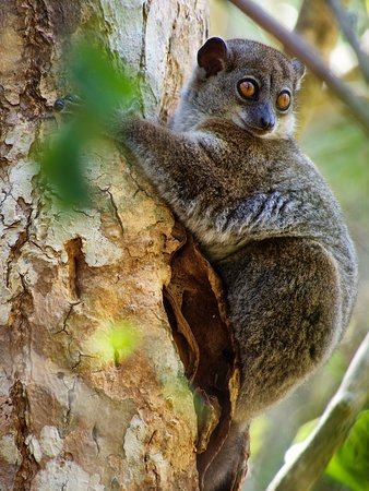 No stay at Time + Tide Miavana would be complete without lemur trekking on Nosy Ankao or the mainland.