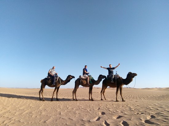 A desert ride on dromedaries !!!!
