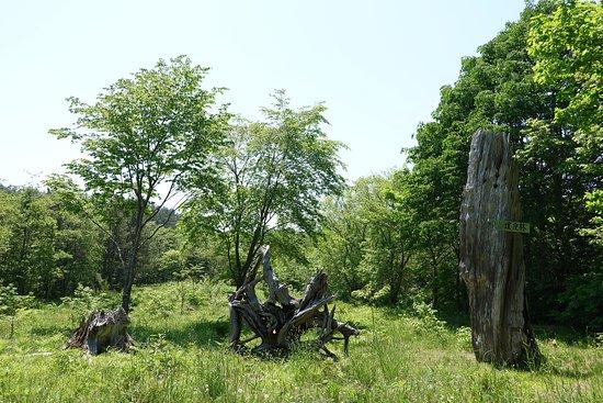 Sarugamori Hiba Maibotsu Forest