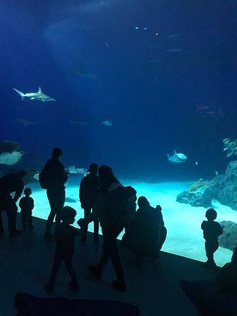 Mange flere fisk i havet dating