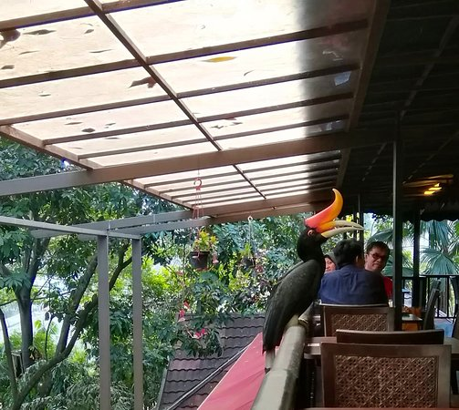Hornbill restaurant and cafe: Hornbill coming close to our table