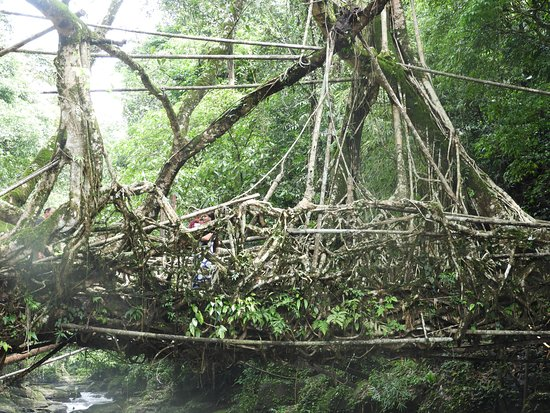 Zoomed view of the Root Bridge