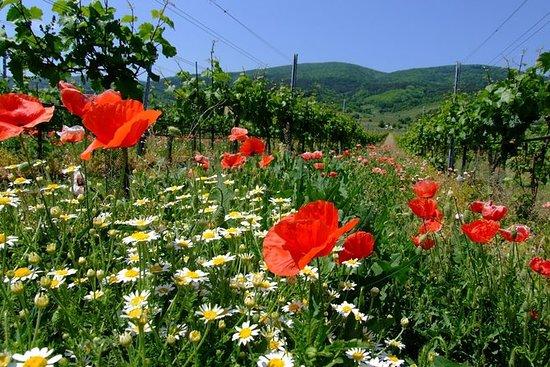 葡萄酒,葡萄藤和美好时光 - 私人维也纳森林和葡萄园日间徒步旅行