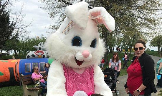 Mrs Bunny at Milburn Orchards