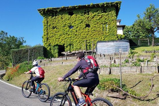 Bike 'n Wine