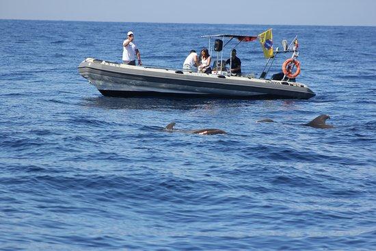 BIOSEAN Whale Watching & Marine Science