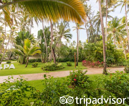The Standard Room Tropical View at the Impressive Resort & Spa Punta Cana