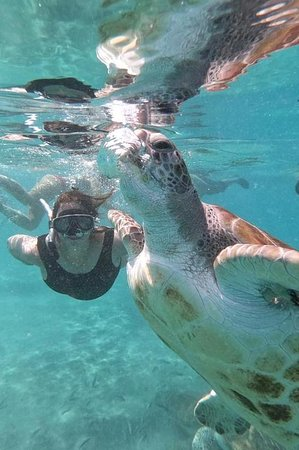Swimming with sea turtles incl. professional pictures: Meu primeiro mergulho NA VIDA!!!