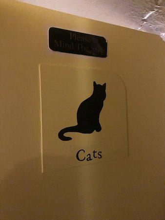 Фотография Shakespaw Cat Cafe