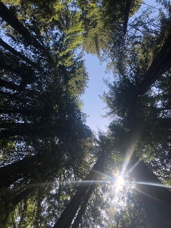 Armstrong Redwood State Reserve: May 2019 Visit