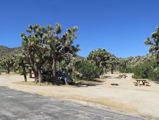 Campsite Picture Of Black Rock Campground Joshua Tree