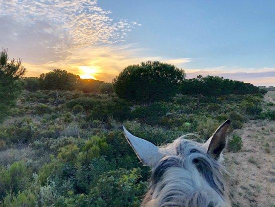 Chiclana de la Frontera, Spanyol: Man kann hier Strandritte buchen und Reitunterricht nehmen. Die Pferde sind sehr gut versorgt und untergebracht. Reitunterricht geben verschiedene Reitlehrer in Dressur und Springen. Bei Karin Leuthardt gibt es Reitunterricht vom Feinsten auf ihren wunderbaren Hengsten, die bis S in der Dressur ausgebildet sind. Ein Genuss für ambitionierte Reiter!