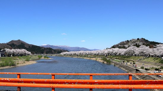 横町橋から眺めた桜並木