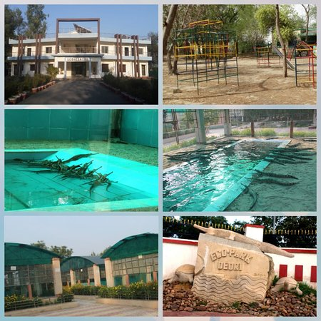 Morena District, อินเดีย: The Ghariyal Centre at Deori, Morena nearby is the only one of its kind in the entire state of MP and gives chance to public to experience the life cycle of aquatic reptiles. There are numerous species of Ghariyal, Tortoise, Dolphins, Crocodile etc in Chambal River which comes under highly endangered species list. The center helps breed and rehabilitate Ghariyals, Tortoises, and Crocodiles in the Eco-Park.Accommodation Type A/C room  Activities: Boating Safari, Bird Watching, Local Food.